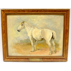 William Woodhouse (British 1857-1939): Study of a Grey Horse, oil on board signed with initials 23cm x 30cm