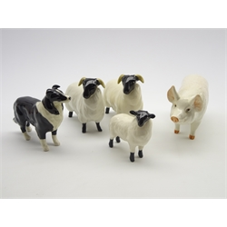 Two Beswick black faced sheep No.1765, black faced lamb 1828, white boar No. 1453A and a sheep dog No. 1854