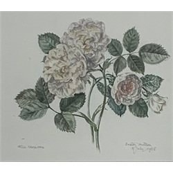 Dorothy Hutton (British 1889-1984) 'Alba Maxima' botanical watercolour, signed and dated 15th July 1956 17cm x 19cm - Artists Resale Rights may apply