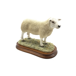 Border Fine Arts 'Texel Ram' limited edition by Jack Crewdson No.492/1500 on wooden plinth